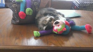 Lucy cuddling with the toy monkey.