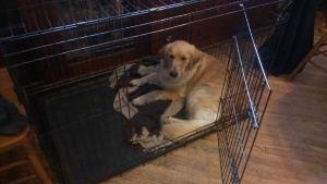 Bonnie loving her crate!