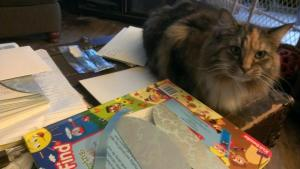 Lucy Kitty Invitation Supervisor