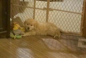 Bess Puppy