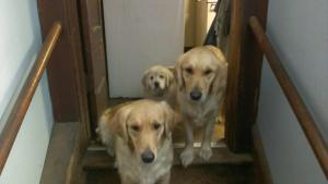 The pups