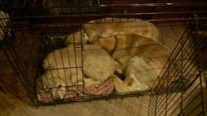 Sleep over in Bess's crate