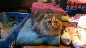 Laundry Supervisor