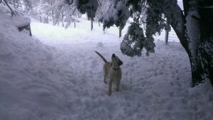 Bess checking out the snow