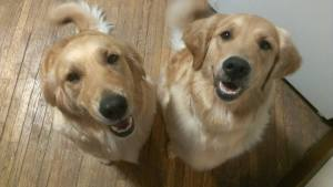 Happy 3rd bday Bonnie and Belle