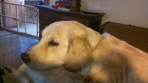 Bess snuggling