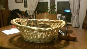 Keeper of the basket