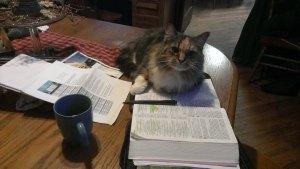 Study Partner